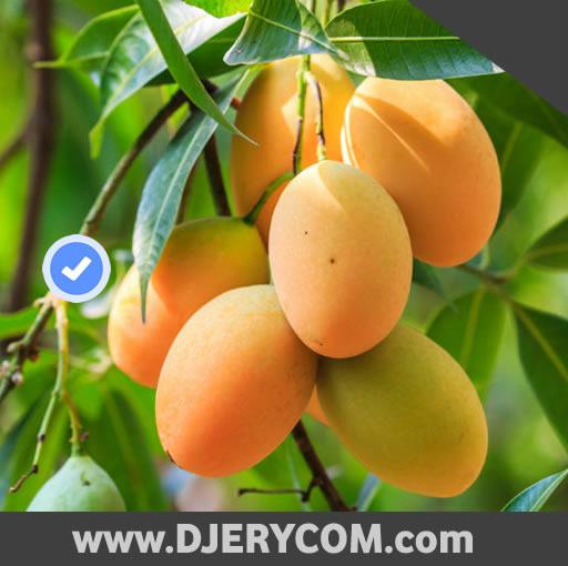 Ugandan Music: Tim Tim | Old Skool - Under The Mango Tree